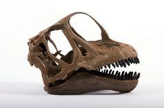 10 Dinosaur Ideas Dinosaur Prehistoric Animals Prehistoric Creatures