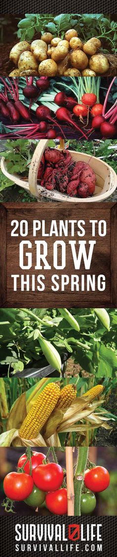 20 Plants To Grow This Spring | DIY Survival Gardening Tips and Ideas By Survival Life. http://survivallife.com/2015/03/02/survival-gardening-for-spring/