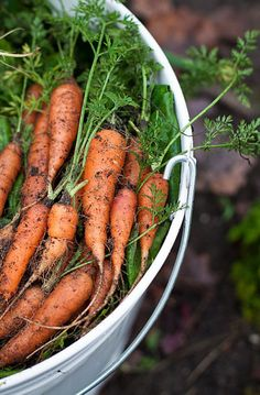 Fresh Carrots just picked Fruit And Veg, Fruits And Vegetables, Fruit Garden, Vegetable Garden, Vida Natural, Cottage Garden Design, Farms Living, Country Life, Country Living