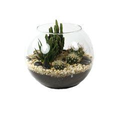 Fishbowl Desert Terrarium