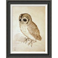 Global Gallery 'Screech Owl' by Albrecht Durer Framed Painting Print Size:
