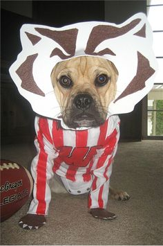 Still looking for costume ideas for your pet?