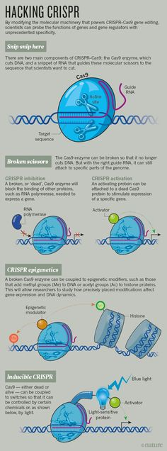 CRISPR: gene editing is just the beginning : Nature News & Comment