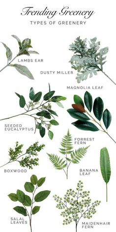 A Guide to Trending Greenery. Types of greenery that are trending for weddings a.- A Guide to Trending Greenery. Types of greenery that are trending for weddings a… A Guide to Trending Greenery. Types of greenery that are… -