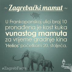 Komorna pozornica kazališta Gavella nazvana je ''Scena Mamut'' u čast ovom zagrebačkom mamutu. #ZagrebFacts #Zagreb #ZG #Agram #Gavella #Mamut #Frankopanska #FrankopanskaUlica #KazalisteGavella #ScenaMamut