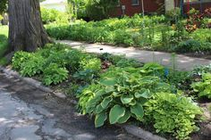 mears garden