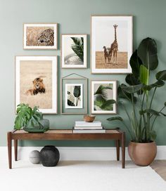 Six art prints composing an art gallery with a nature's theme styled against a green wall with planters and a bench for that organic vibe. Image via Desenio.