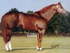Obvious Conclusion AQHA  Google Image Result for http://www.benmarfarm.com/images/obviousconclusionstallion.jpg