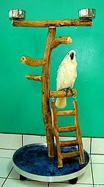 #BirdStand #BirdGym This Dragonwood Bird Stand features levels that encourage exercise.  Very sturdy base and two cups.  Great budget minded bird stand in three sizes.