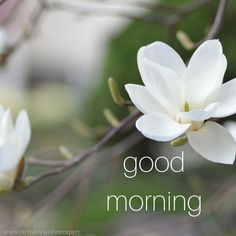 Good morning rose colorful good morning flowers pictures beautiful flowers images good morning images with flowers hd beautiful good morning. Morning Quotes Images, Good Morning Images Hd, Morning Greetings Quotes, Good Morning Picture, Good Morning Messages, Good Morning Good Night, Morning Pictures, Good Morning Wishes, G00d Morning