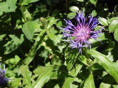 eine stille ecke Garden, Plants, Garten, Gardening, Plant, Outdoor, Gardens, Yard, Planting