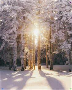 Tips For Digital Nature Photography – PhotoTakes Winter Photography, Landscape Photography, Nature Photography, Winter Sunset, Winter Love, Winter Pictures, Nature Pictures, Winter Schnee, Winter Magic