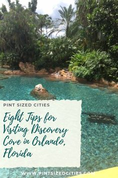 This summer we booked a trip to Discovery Cove in Orlando, Florida after friends suggested that everyone should visit at least once. We loved our day, and while I thought this would be a one and done trip for us, we are already talking about going again. Here are eight tips for visiting Discovery Cove.