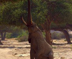 Hoanib River Wildlife Mountain Zebra, Giraffe, Elephant, Namib Desert, Wilderness, Skeleton, Safari, Wildlife, Coast