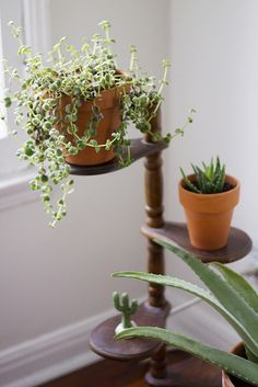 plant stand by kate / for me, for you, via Flickr