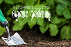 Is there really a difference between regular gardening and organic gardening? Yes. Today we're going to take a look at those differences.