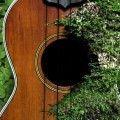 Buenas tardes, noches o dias: toco la guitarra hace 1 año y me gustaria aprender a tocar el ukelele no tengo la menor idea de marcas, calidad o precio pero elegi 2 masomenos baratos para aprender y algun dia comprarme uno profesional, ahora cual de...