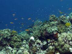 The corals on the house reef at Uepi... if this is just the house reef, imagine what the rest of the diving is like!
