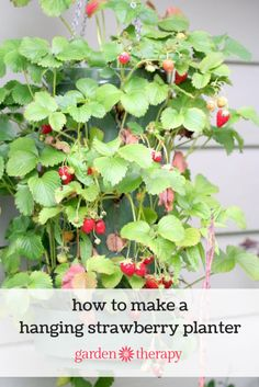 How to grow a hanging strawberry planter with 30 plants in just 2 feet of space (and you don't need a garden)