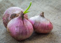 DOWNLOAD :: https://jquery.re/article-itmid-1008534446i.html ... Onions ...  Sprouting, agriculture, bulbs, closeup, cut, food, fresh, greenery, group, image, ingredient, kitchen, leaves, natural, onions, plant, raw, red, ripe, root, sackcloth, spice, vegetables  ... Templates, Textures, Stock Photography, Creative Design, Infographics, Vectors, Print, Webdesign, Web Elements, Graphics, Wordpress Themes, eCommerce ... DOWNLOAD :: https://jquery.re/article-itmid-1008534446i.html