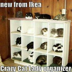 Crazy Cat Lady Cat Organizer - classic!!