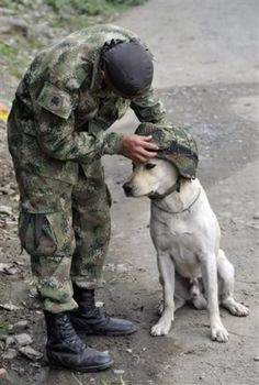 military working dogs :)