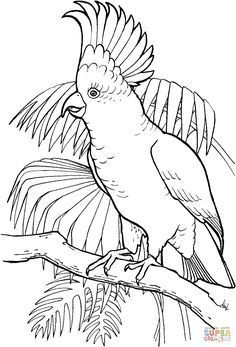 Outline Drawings, Bird Drawings, Animal Drawings, Bird Coloring Pages, Coloring Books, Pink Cockatoo, Tropical Birds, Bird Design, Painting Patterns