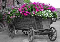 Colorful flowers, cool cart