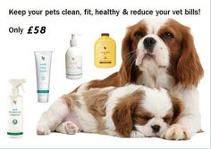 Keep you pets clean and healthy for only £58