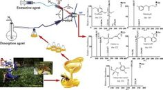 #IJMS: Direct detection of multiple pesticides in honey by neutral desorption-extractive electrospray ionization mass spectrometry #MassSpec