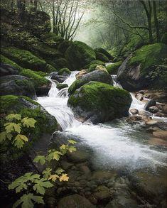 """Dance of Autumn"" by Adair Payne Landscape Photos, Landscape Art, Landscape Paintings, Landscape Photography, Nature Photography, Forest Landscape, Beautiful World, Beautiful Places, Beautiful Pictures"