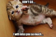 Don't go, I will miss you so much. Picture Quotes.