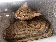 PetHarbor.com: Noah, neutered male about 2 years old, Humane Soc. of Washington Co., Hagerstown, MD, at shelter since Jan. 2014