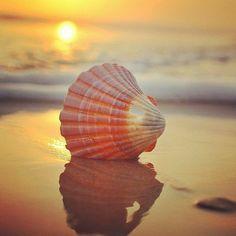 Pictures Images, Nature Pictures, Flower Graphic Design, I Love The Beach, Unique Wallpaper, Beach Aesthetic, Amazing Nature, Sea Shells, Sunrise