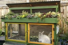 Rabbit Hutch made from pallets and lumber with a green roof...use their manure for fertilizer and hay as mulch