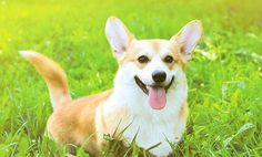 10 Dog Breeds That Live Long Lives