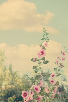 hollyhocks by lucia and mapp on Flickr
