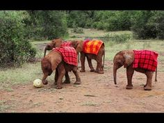 Watch the whole, adorable tutorial here: | How To World Cup, As Told By Baby Elephants