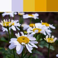 《Yellow Florets Palette》