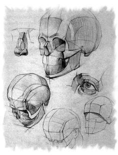 Рисунок карандашом-техника и секреты » Blog Archive » Рисунок черепа в трех поворотах