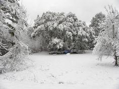snow in wilmington nc