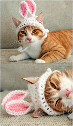 Your Furbabies Will Look Adorable In Their Easter Bunny Ears Hat - Get Yours Ordered Now! Every Bunny wants these adorable ears and your furbaby will look super cute for their Easter photo shoot. Get yours ordered now. Crochet Cat Toys, Crochet Birds, Crochet Bunny, Crochet Animals, Knitted Dolls, Crochet Hats For Cats, Easter Bunny Ears, Cat Sweaters, Ear Hats
