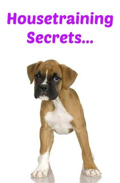 Want to learn a few puppy potty training secrets? Learn these and many other dog training secrets using these hands-off methods. Click here to read more>> http://www.dog-names-and-more.com/hands-off-dog-training.html