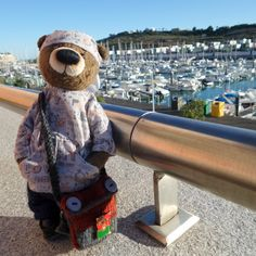 Bear in Portugal. My Friend, Portugal, Bear, History, Historia, Bears