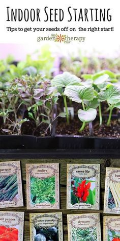 How to start plants from seeds #Organic_Gardening