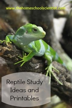 a study of reptiles Of what value is herpetology as a herpetologist for nearly 60 years i have often  asked myself precisely that question the easiest answer has.