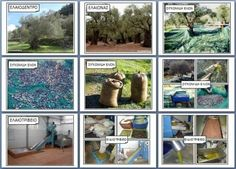 ΕΛΙΑ - ΑΡΧΙΚΗ School Projects, Projects To Try, Olives, Environmental Education, Autumn Crafts, Teaching Biology, Fall Is Here, Learning Arabic, Organic Chemistry