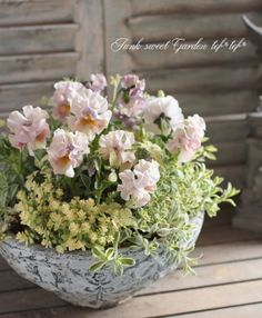 tef*tef*寄せ植え<BR>2015 * no36 *<BR><BR>フリルパンジー×クリームリーフ Container Plants, Container Gardening, Green Flowers, Beautiful Flowers, Pot Jardin, Pot Plante, Greenhouse Gardening, Romantic Flowers, Pansies