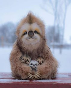 Cute Wild Animals, Animals And Pets, Funny Animals, Nature Animals, Beautiful Creatures, Animals Beautiful, Baby Sloth, Tier Fotos, Animal Photography
