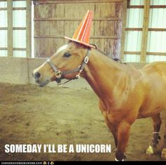 Not everything can be really funny, some things are just mildly funny. Not every picture is worth an LOL, some funny pictures are worth a chuckle and there is nothing wrong with that. Here are 38 pictures worth a chuckle. Try not to LOL. Funny Horse Memes, Funny Horses, Funny Animal Memes, Animal Quotes, Funny Animal Pictures, Funny Memes, Horse Humor, Funny Captions, Funny Unicorn Quotes